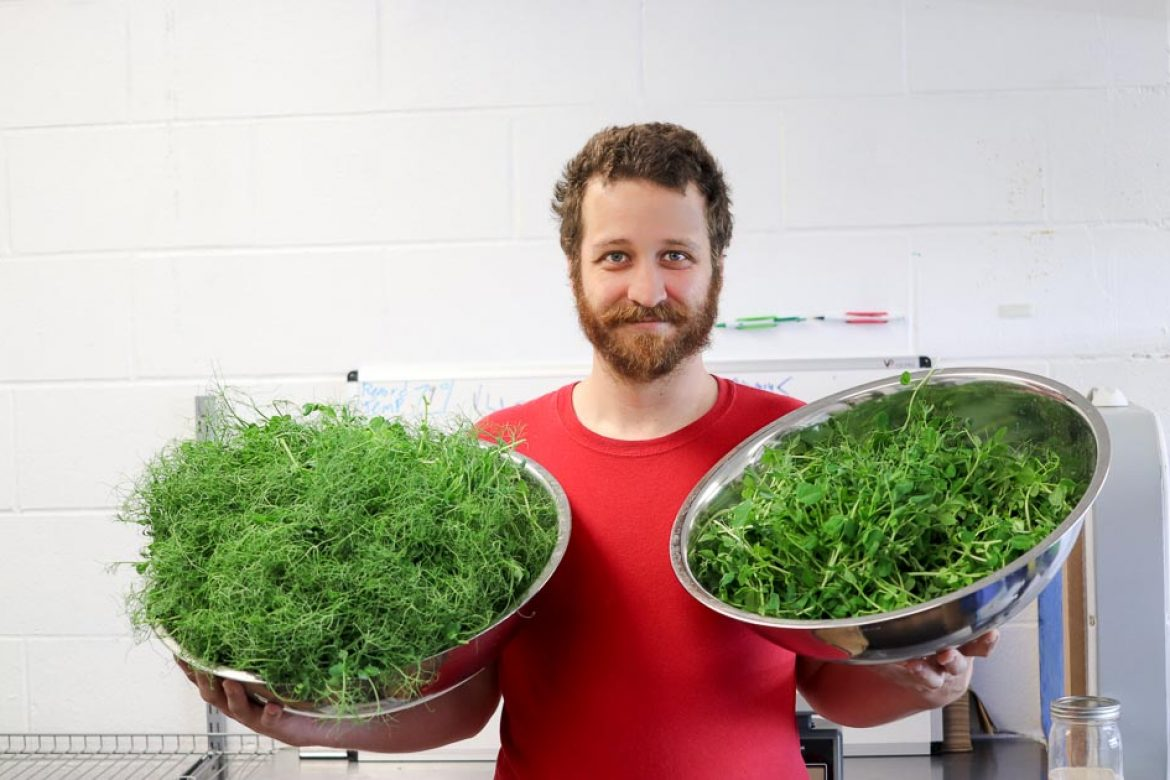 Ian Mott CEO holding a Harvest of Green Peas (Left) and Sugat Ann Peas (Right) #supermicrogreens #superfood #Indianapolis #localfood